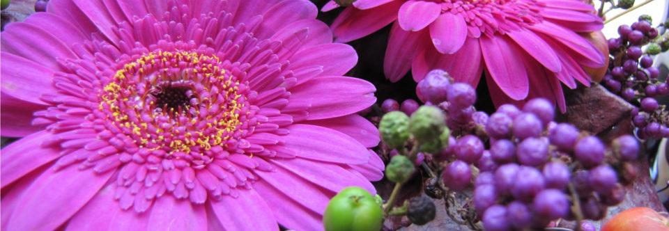 Kleuren & hun betekenis